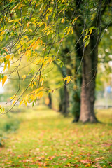Wind  (T.ye) Tags: leaf leaves outside outdoor wind atmosphere blur tree trees landscape