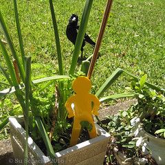 Yellow standing running man and magpie (2 of 2) (Su_G) Tags: sug 2016 standingrunningman magpie yellowstandingrunningman yellow garden 3dprinting 3d bird australianbird maker makerlink