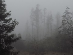 foggy morn (unkleD) Tags: fog deadtrees forest