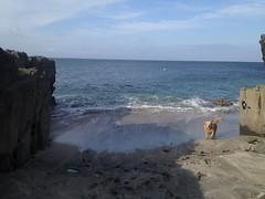 Molly (Cherryl.B) Tags: chien dog goldenretriever mer ocan plage sable rochers falaise vagues vacances tourisme