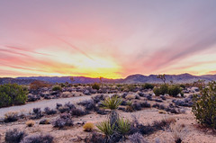 Sunset from Joshua tree national park (Shibu Thannikkunnath) Tags: sunset joshuateenationalpark trees redsunset flatlad desert arizona california nikond700 tokina1116 f2 8 beforedark eveing