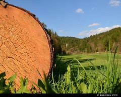 The Giant (H. Eisenreich Foto) Tags: wood nature rock log nikon natur hans valley trunk holz oberpfalz fals stamm lauterach lwenzahn baumstamm kastl jahresringe lauterachtal eisenreich sternfall mhlausen mygearandme mygearandmepremium utzenhofen