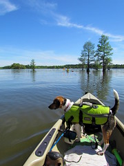 Lowcountry Unfiltered - Lake Marion Ghost Town Paddle - April 2013 (292) (greenkayak73) Tags: friends beagle nature america fun lucy southcarolina adventure kayaking ghosttown mrrussell riverdog lakemarion greenkayak73 randomconnections photopaddling lowcountryunfiltered nitrorev johnatgcc rockscemetery