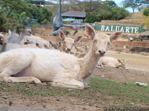 Animal encounters at Baluarte zoo in Vigan photos by Azrael Coladilla
