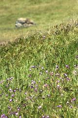 Spring..Gone Too Soon (socaltoto11) Tags: california wildflowers kerncounty windwolvespreserve
