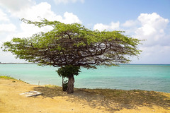 aruba (Bruno Farias) Tags: summer island aruba caribbean ilha caribe onehappyisland everrocks obrunofarias