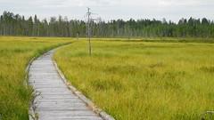 A view to the Sokanaapa aapa mire (Pelkosenniemi, 20140722) (RainoL) Tags: summer sol finland landscape geotagged july lapland fin bog lappi 2014 pelkosenniemi 201407 aapamire 20140722 sokanaapa geo:lat=6716009027 geo:lon=2756964760
