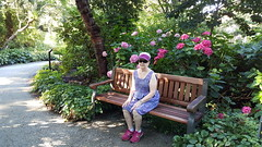 Resting in Finnerty Gardens (wjis21) Tags: finnerty uvic universityofvictoria oakbay saanich victoriabc walk mountain hike galaxynote5 finnertygardens flowers floral climb cardio exercise