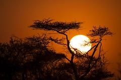 Amanecer en el Serengeti (magomu) Tags: serengeti tanzania africa kananga sunrise amanecer sigma150600contemporary special tented camp