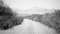 Back Road To Nevada (Shot by Newman) Tags: ilford bw ilforddelta400 dirtroad brush dry mountainbackdrop southwest shotbynewman 35mm daylight backroad