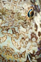 8 (T Bwa Dl) Tags: antilles carabe caribbean dive diving eyes frenchwestindies fishesfishunderwaterdivingscubadivingwildlifecarabes mer marine macro nature national plonge reef rcif saintbarthlemy scubadiving sousmarine underwater wildlife westindies