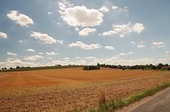 Field nearby Meissen-Lercha (horschte68) Tags: meissen pentax landschaft landscape summer sommer field outdoor feld deutschland germany sachsen saxony