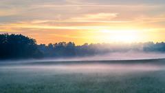 an ordinary bavarian morning (Stadt_Kind) Tags: sunrise dusk sun sonnenaufgang sonyilce7 sonya7 sony a7 sonyfe2890macrogoss field landscape fog stadtkind kempten bavaria germany europe new flickr mostinteresting popular
