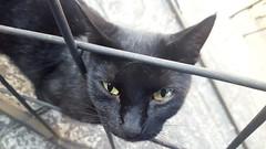 Gatitoo (Zuncra*) Tags: cat gato gatito mew