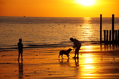 Who let's the dog out (Dannis van der Heiden) Tags: dog people seaguls beach dusk dishoek zeeland walcheren netherlands slta58 happyness sigma18300mm sundown goldensun silhouette silhouetts westerschelde noordzee
