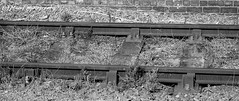 Weedy railway lines at Hull station. (MAMF photography.) Tags: blackandwhite blackwhite britain bw biancoenero blancoynegro blanco blancoenero weeds england enblancoynegro eastyorkshire flickrcom flickr google googleimages gb greatbritain greatphotographers greatphoto hull hu1 hullparagonstation inbiancoenero image mamfphotography mamf monochrome nikon noiretblanc noir negro nikond7100 northernengland old photography pretoebranco photo railway sex schwarzundweis schwarz uk unitedkingdom upnorth yorkshire zwartenwit zwartwit zwart railwaylines railwaystation