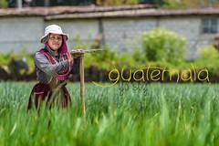 La jovial Francisca (Carlos A. Barrientos) Tags: dios diosmiartistafavorito guatemala imguatemala people quetzaltenango colors light portrait smile guatemalteco work visiting visitguatemala travel culture farming
