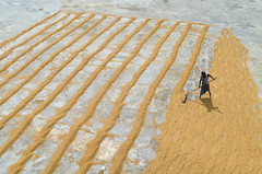 Paddy drying field! (ashik mahmud 1847) Tags: bangladesh d5100 nikkor line people pattern man working light shadow
