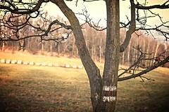 Horn Sedlo (trekkpics) Tags: evropsk dlkov trasa e3 europischer fernwanderweg wandern gebirge berg baum schsische schweiz bhmische snnk dn esk vcarsko bergsteigen mezn louka prebischtor pravick brna elbsandstein tiere pflanzen felsen bhmen tschechien wald bad schandau hensko eisenbahn budweiser bier outdoor pflanze gabrielensteig gabrielina stezka deutsche bahn nationalpark bahnhof jedlov tannenberg lausche waltersdorf zittauer burg toltejn lausitzer lausitz luick hory lu czechmountains czech mountains kammloch hochwald hochwaldbaude oybin oberlausitz horni sedlo colourartaward canon eos sony