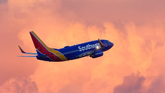 Southwest Cotton Candy (hotdog.aviation) Tags: