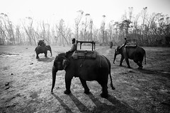 Elephant crossing (Steffen Walther) Tags: canon nepal chitwannp bw fineart reisefotolust elephant jungle mahut shadow asia travel steffenwalther