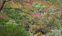 Lost in autumn (yuanxizhou) Tags: westcoast britishcolumbia vancouver vanduesen field garden life season nature beautiful colors leaves trees autumn fall september