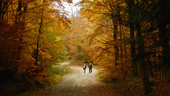 Autumn Walk (theSnoopyG - thanks for over 460.000 views!) Tags: autumn walk fall path way road autumnleafcolour autunno autunnale autumnleaves autumnleafcolor autumnal foliage fallfoliage two couple walking explore trekking nature people october herbst
