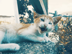 Cats Edition 8 - (23) (Robert Krstevski) Tags: robertkrstevskiblogspotcom robertkrstevski cat pet pets animal animals animallovers animalslove lovely filter filters color colors kitty kitten kittens kitties cute cuteness gato gatos popular macedonia catsedition8 lachatte chatte