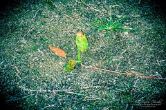 Embalse de Santillana (jchmfoto.com) Tags: wondersofnature entorno environment medioambiente maravillasdelanaturaleza sotodelreal comunidaddemadrid espaa es