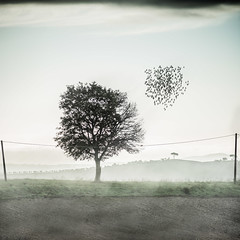 Fly away (alexanderkoch) Tags: landscape compositing photoshop bird sunset fog tree landschaft tuscany crete senesi siena toskana acre sky himmel