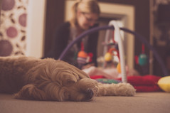Feeling Left Out (erringtonsimon) Tags: dog dogs baby babies play lazy sleep cot mum dad parents mat cosy happy tibetan terrier nex sony 5r 50mm prime