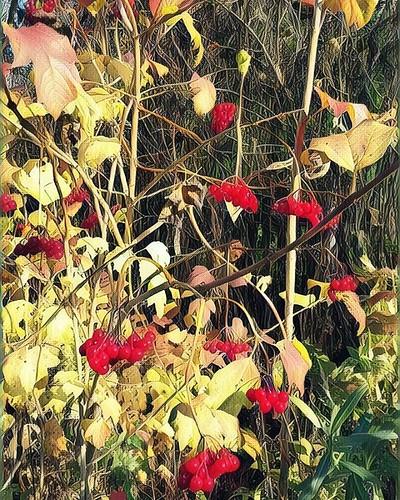 #openmoscow #autumn #mskoblast  Буйство коасок. Кружится голова. #nature #openair #vinci #village