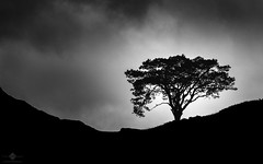 Lone Tree (chmeermann   www.chm-photography.com) Tags: fujineopan1600 baum wolken silhouette nikon d7100 schwarzweis 18135 himmel landschaftsfotografie querformat landschaften nikkor natur lightroom vscofilm landschaft blackwhite bw landscapeformat monochrome nature sky sw scotland unitedkingdom gb