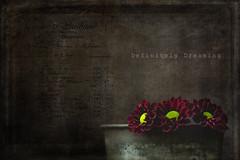 Dark Flowers {textured} (DefinitelyDreaming) Tags: flowers floral dark darkflorals moody lowkey textured 2lilowls vintage sonya99