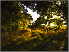 Light And Shade. (Picture post.) Tags: landscape nature green sunrise trees dappled light track autumn paysage arbre interestingness