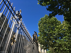 grille rue (alexandrarougeron) Tags: verte feuille ciel arbre grille noir avenue paris portail urbain ville