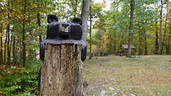 Savage River State Forest (AccessDNR) Tags: 2016 savageriver stateforest garrettcounty westernmaryland woodcarving bear