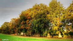 Autumn is there (Ld\/) Tags: waimes automne autumn color tree belgique eifel octrobre october 2016 ardennen ardennes ardenne wallonie wallone nature arbre