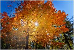 OCTOBER 2016  NM1_0961_015369-22 (Nick and Karen Munroe) Tags: munroedesignsphotography munroedesigns munroephotography munroe nikon nikond750 nikon2470f28 nickmunroe nickandkarenmunroe nickandkaren karenick23 karenick karenandnickmunroe karenmunroe karenandnick fall fallcolors fallsplendor autumn beauty brampton ontario canada sunset sunburst