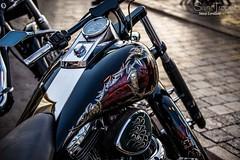 HARLEY (steve lorillere) Tags: woman girl festival femme mulher harleydavidson moto motorcycle frau menina fille mdchen  motocicleta motorrad sainttropez