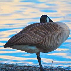 Wake Me (James Inglis) Tags: park lake canada nature bc abbotsford