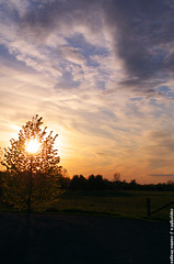 Spirit in the Sky (S. J. Coates Images) Tags: sunset ontario tree kingston lemoinepointconservationarea
