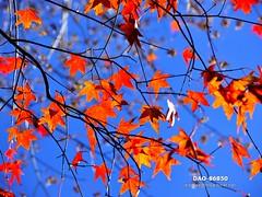 DAO-86850 (Chen Liang Dao  hyperphoto) Tags:   taiwan
