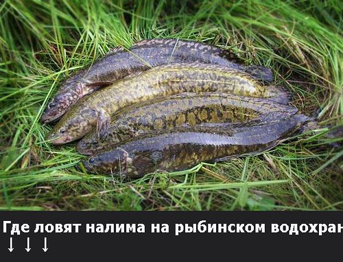 где клюет рыба в самаре сейчас