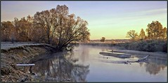 Kiev Rus, Ukraine (Yuriy Sanin) Tags: velvia50 largeformat linhofiii 4x5 colour trees river  coast  dawn yuriy sanin blackandwhite bw  reflection           teterev