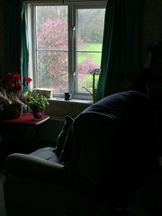 Empty Seat (NJKent) Tags: emptyseat uk tree floweringcherry derbyshire recliningchair seat window