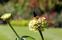 Zomer in de Leuvense Kruidtuin (Kristel Van Loock) Tags: zomer2016 summer2016 kruidtuin leuvensekruidtuin kruidtuinleuven zomerindekruidtuin september2016 botanicalgarden botanischergarten botanischetuin jardinbotanique jardinbotaniquedelouvain giardinobotanico lovanio lovaina louvain lwen vlaanderen vlaamsbrabant flanders fiandre brabantflamand brabantefiammingo flemishbrabant visitleuven seemyleuven leveninleuven cityofleuven leuvencity visitflanders visitbelgium hortusbotanicuslovaniensis flores flora flowers fiori blumen bloemen fleurs