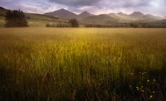 Crianlarich Hills (David Haughton) Tags: crianlarich hills scotland scottish highlands westhighlandway fields landscape fineart grassland grass rural countryside
