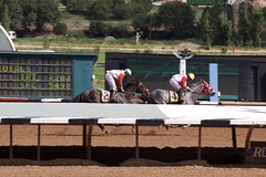 checking on the competition (DanJBailey) Tags: newmexico nm ruidoso downs horse horses thoroughbred race racing canon 60d