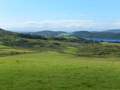 Fields above the WLT, 2016 Aug 04 -- photo 2 (Dunnock_D) Tags: uk unitedkingdom britain scotland argyll kintyre green grass field westlochtarbert loch sea sealoch hills